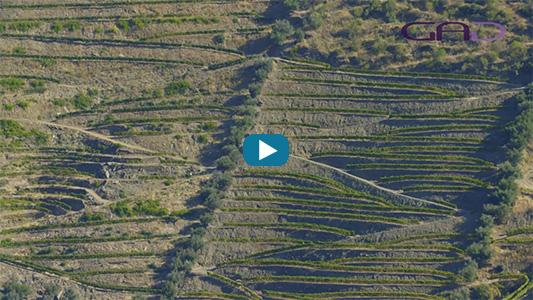 Vue aérienne des vignes au Portugal.